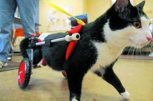 паралич-у-кошек