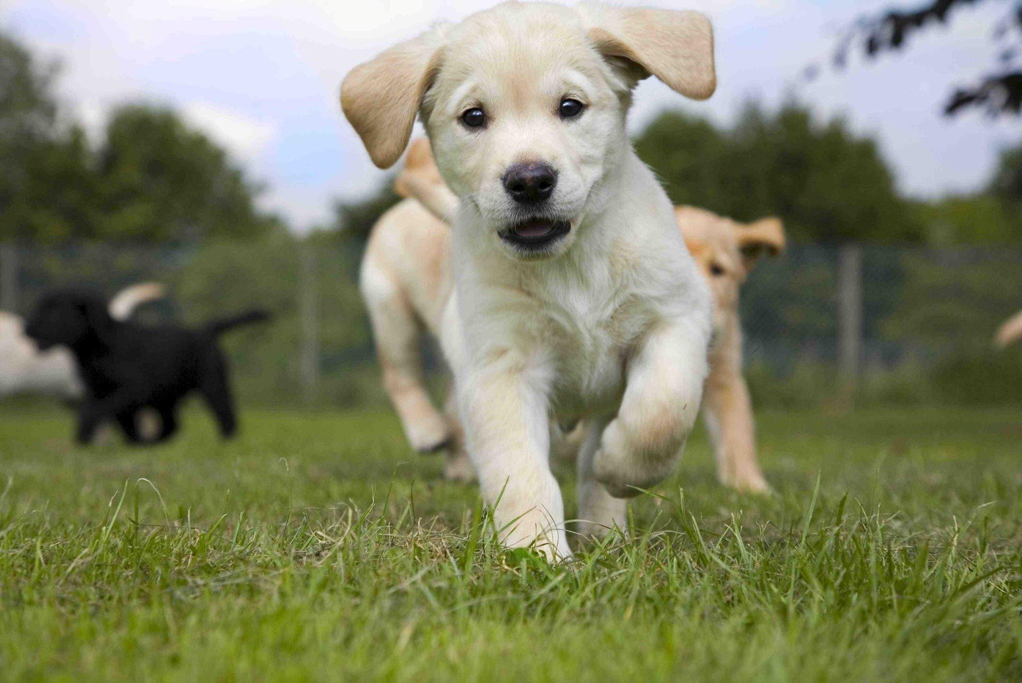 Учим щенка базовым командам