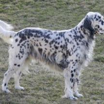 Породы собак с фотографиями