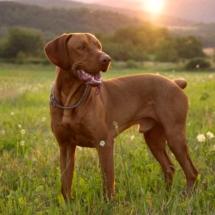 Породы собак с фото и описанием