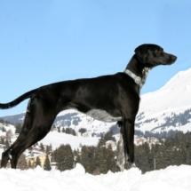 Породы собак с картинками и описанием