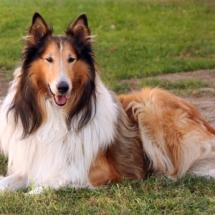 Породы собак с фото