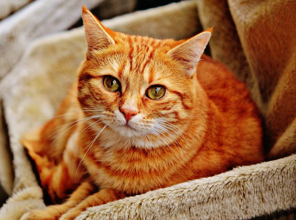 Клички для рыжего кота мальчика