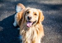 кашель у собаки