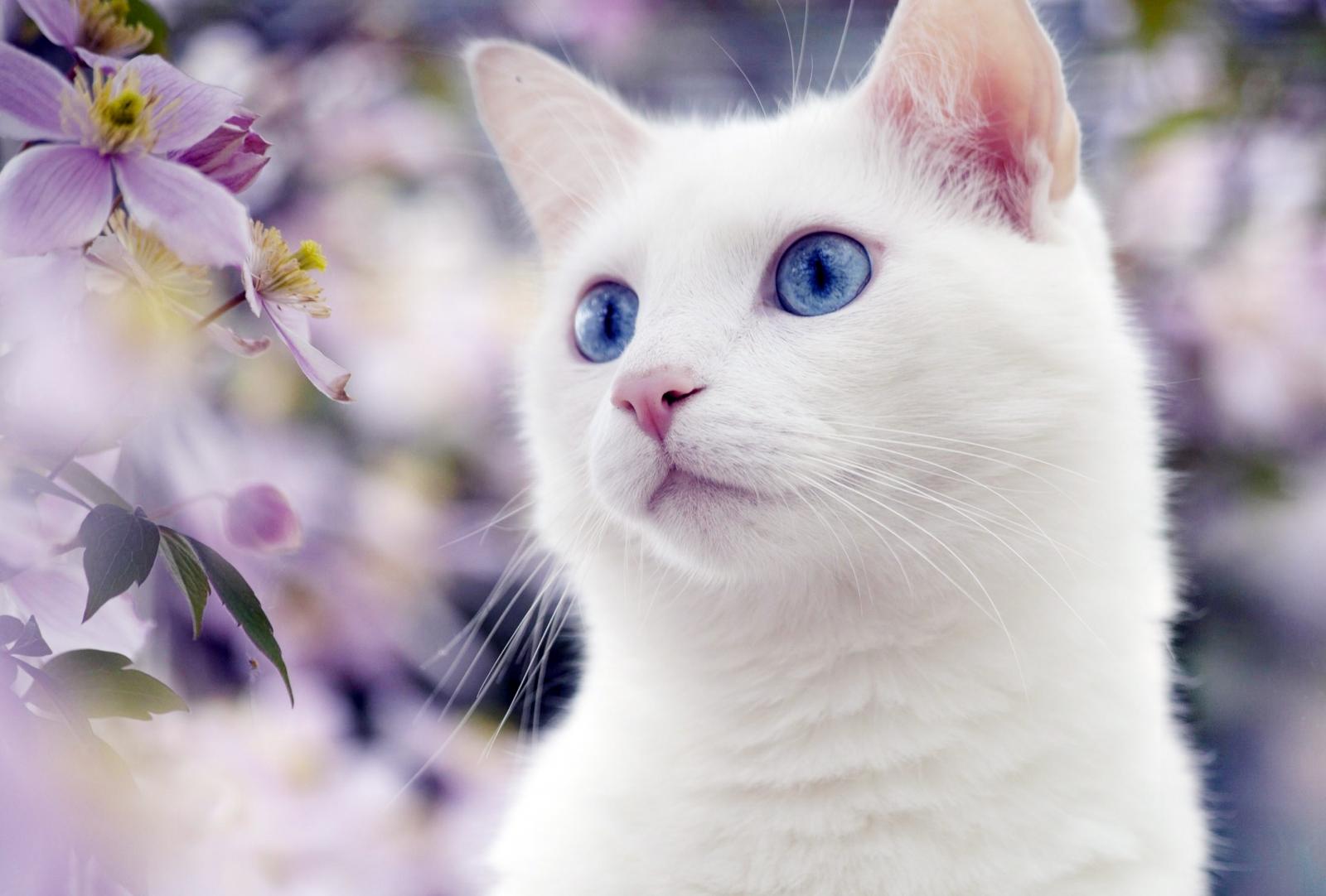 Как назвать котенка мальчика белого цвета с голубыми глазами
