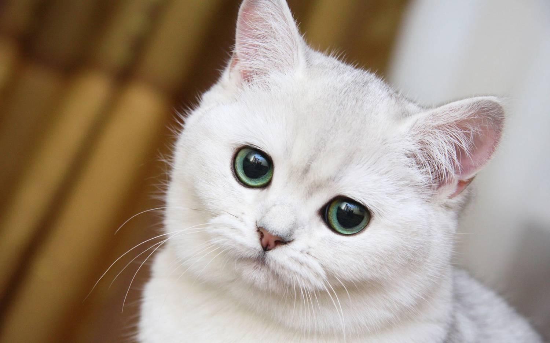 Прикольные имена для кота белого цвета
