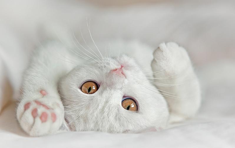 какую кличку дать белой кошке
