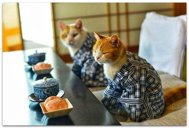 Японские клички и имена для кошек
