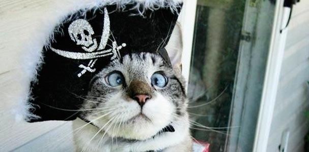 Смешные имена для котов