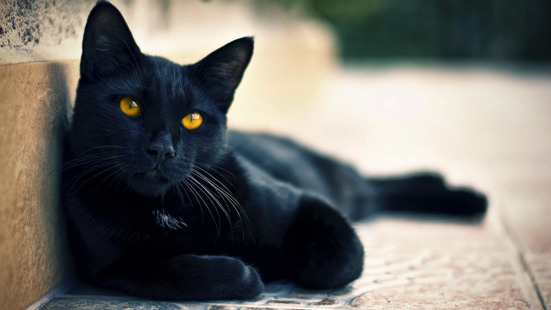 Имя для котёнка черного цвета