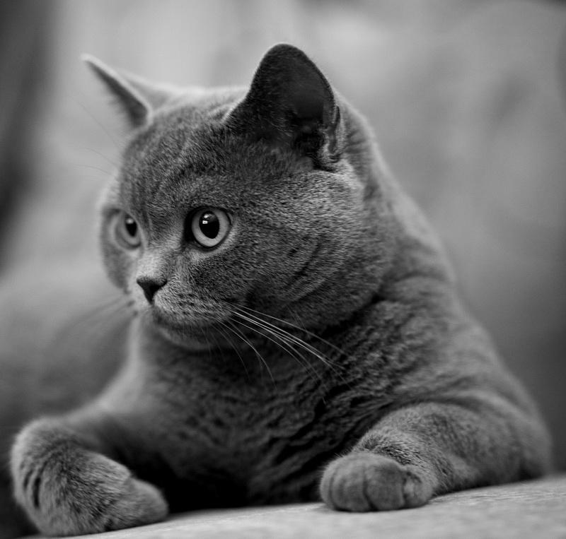 Фото лапа кота