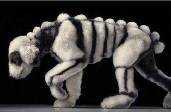 strigka-psa