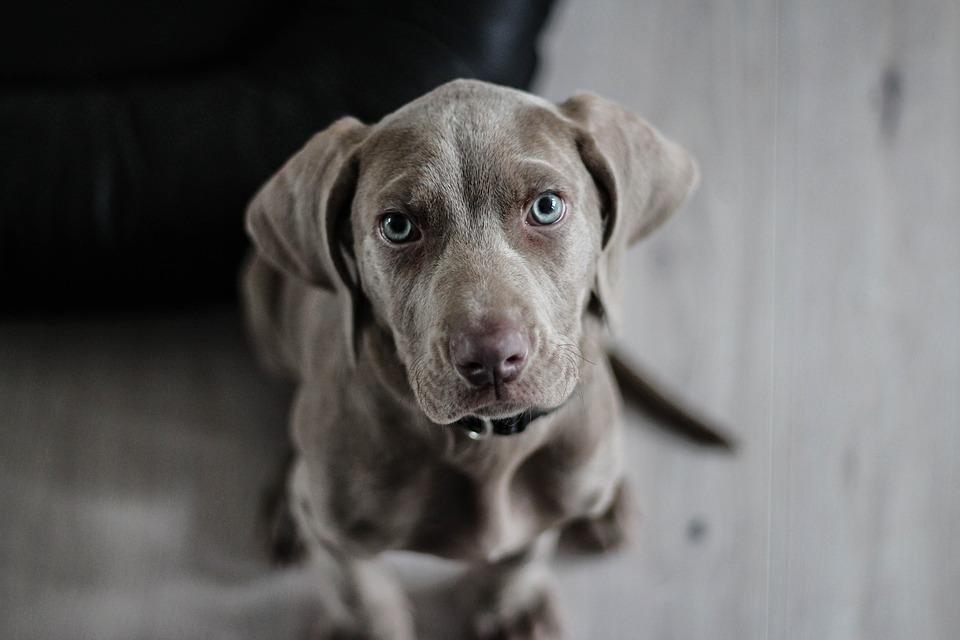 Чем кормить щенка 1 месяца