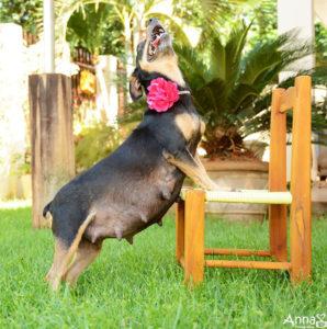признаки родов у собаки