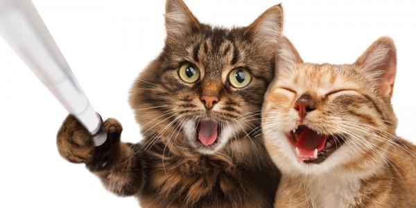 клички для кошек, имена для кошек