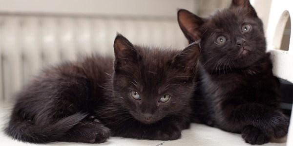 Болезни от кошек передающиеся человеку
