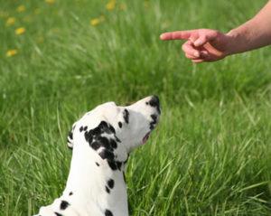 как-приучить-щенка-к-командам