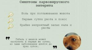 Парвовирусный-энтерит-у-щенков