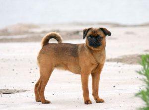 маленькие пород собак