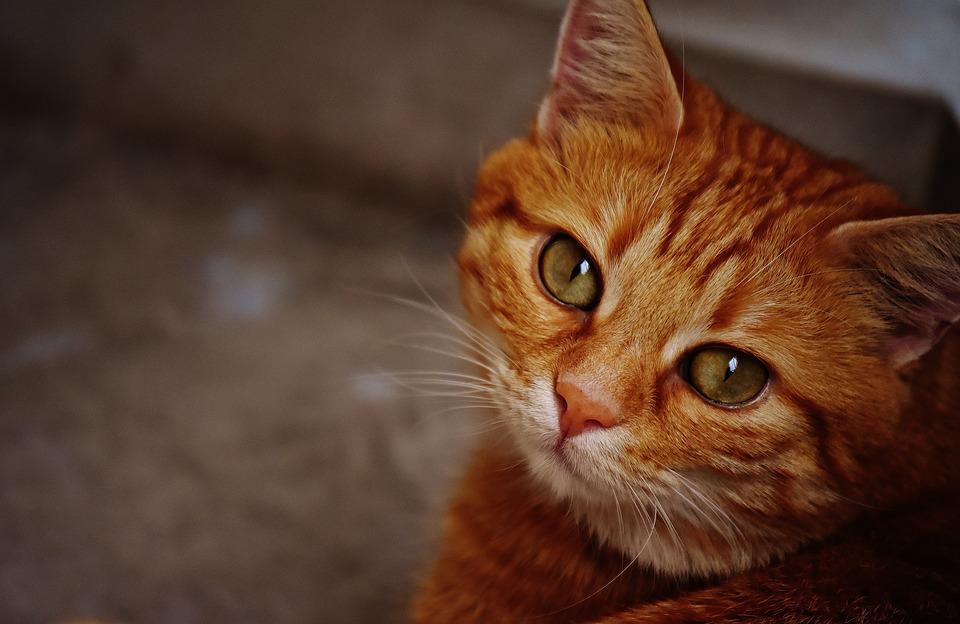 Имена для рыжей кошки девочки