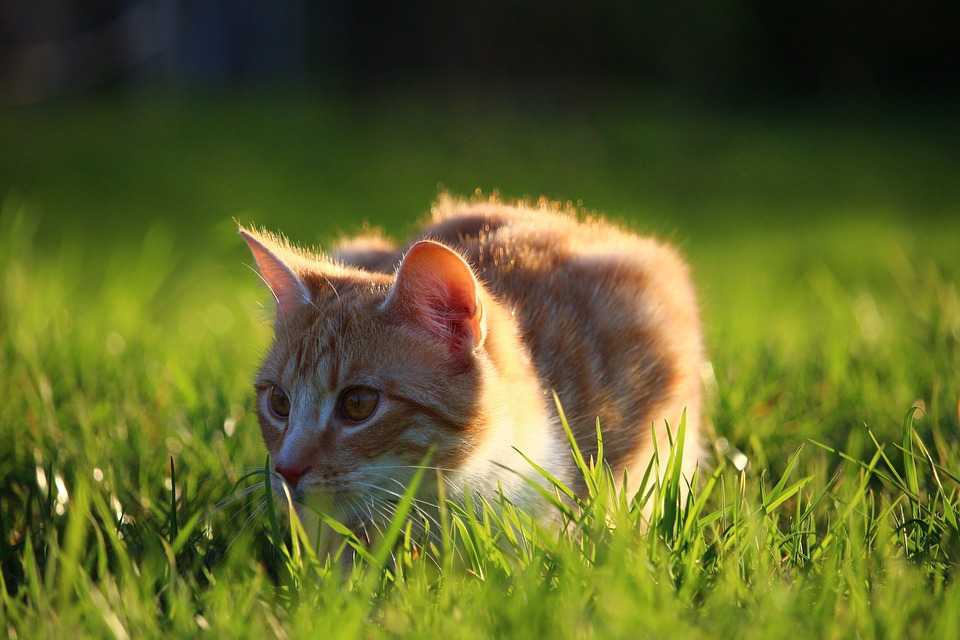 Клички для рыжей кошки