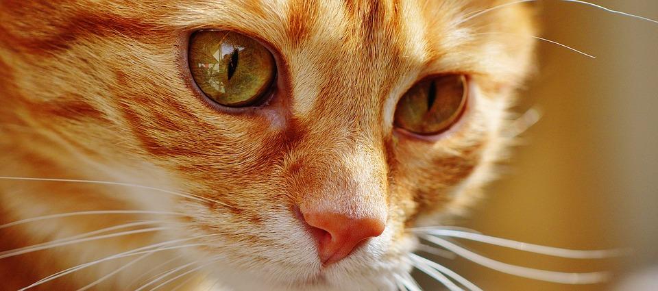 Клички для рыжих котов список для девочек и мальчиков