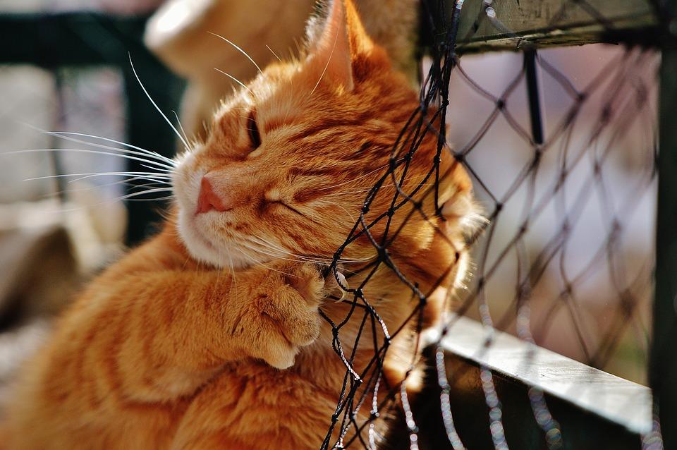 Имена для рыжей кошки