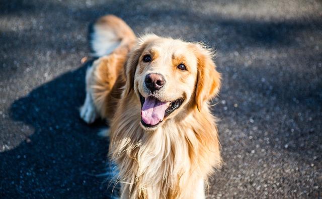 Аллергический кашель у собак