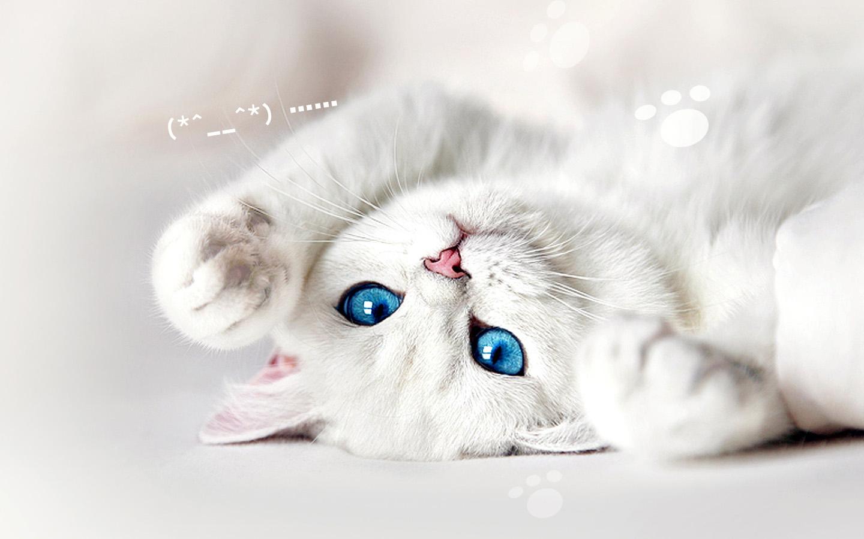 Клички для белой кошки