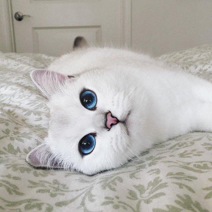 как назвать белую кошку