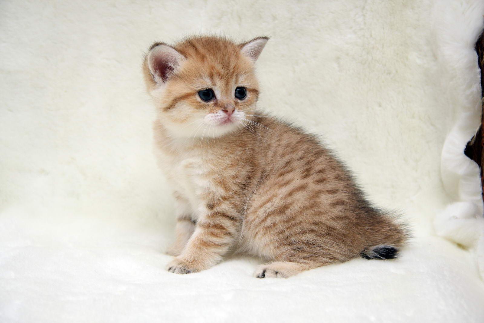 Английские клички для кошек