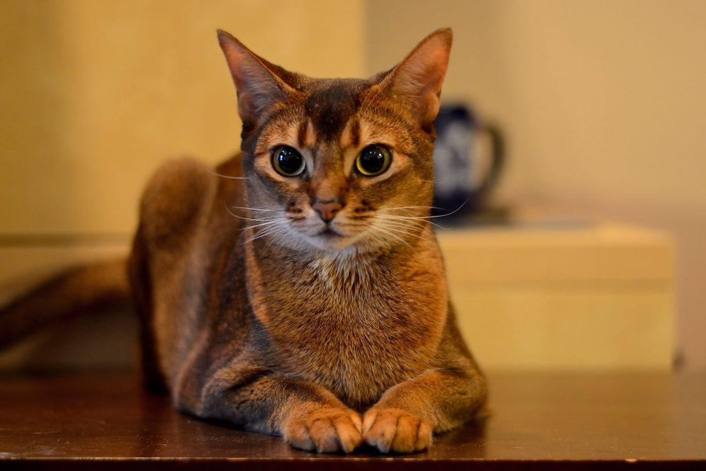 египетские имена для кошек