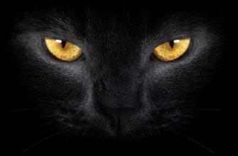 имена и клички для черных кошек