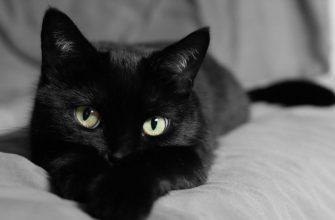 почему и к чему снится кошка