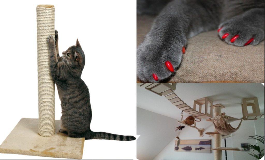 альтернатива удалению когтей у кошек